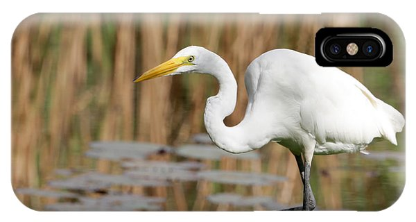 Great White Egret By The River IPhone Case