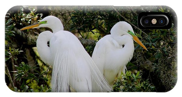 Great White Egret Pair In Breeding Plumage IPhone Case