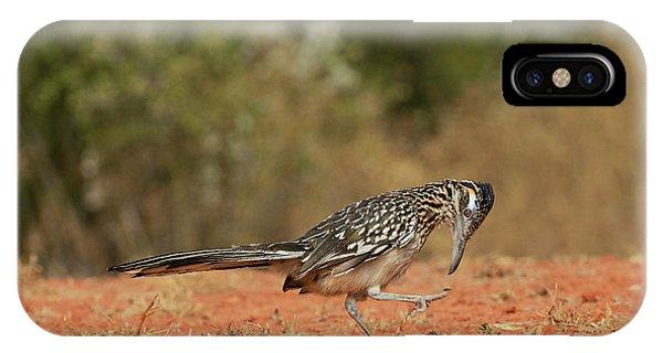 Greater Roadrunner (geococcyx IPhone Case