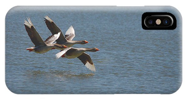 Greater White-fronted Geese In Flight Series 4 IPhone Case