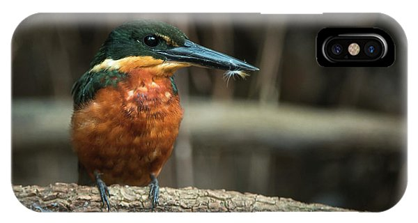 Green And Rufous Kingfisher IPhone Case