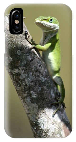Green Anole Ready For Lunch IPhone Case