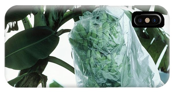 Monocotyledon iPhone Case - Green Bananas Covered With Plastic Bag by Andrew Mcclenaghan/science Photo Library.
