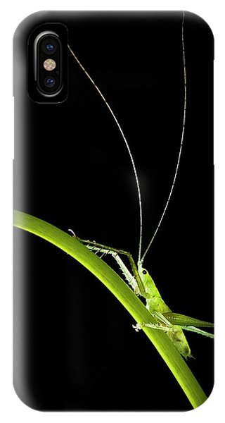 Green Bush Cricket Phone Case by Alex Hyde