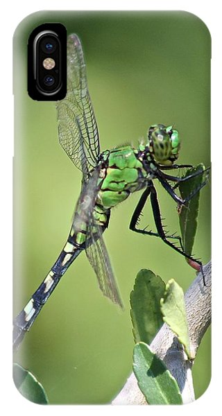 Green Dragonfly Eastern Ponhawk IPhone Case