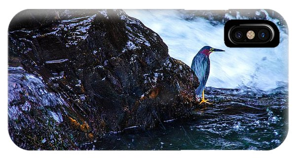 Green Heron Blue During Mating IPhone Case