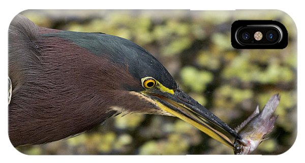 Green Heron Fishing IPhone Case