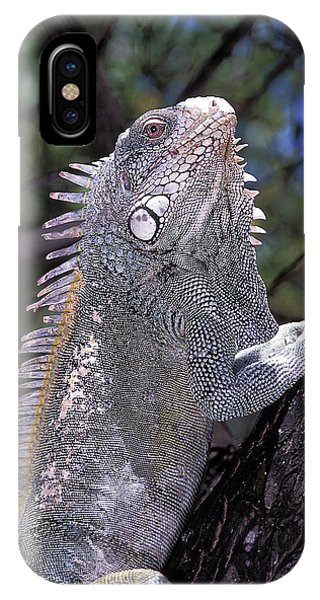 iPhone Case - Green Iguana by Clay Coleman/science Photo Library