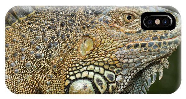 Belize iPhone Case - Green Iguana (iguana Iguana by William Sutton
