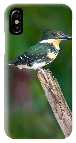 Green Kingfisher Chloroceryle IPhone Case
