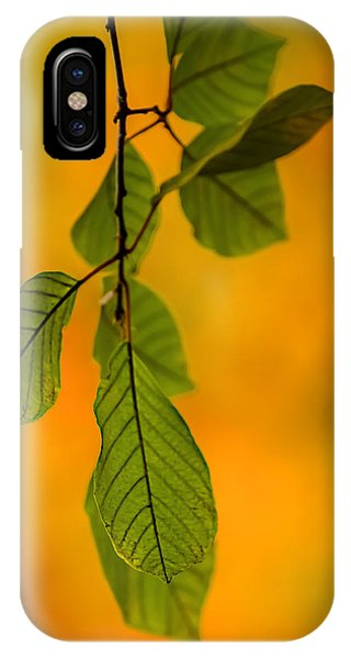 Green Leaves In Autumn IPhone Case