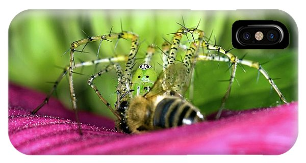 Lynx iPhone Case - Green Lynx Spider Feeding by Clay Coleman/science Photo Library