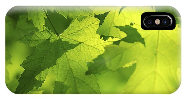 Leaf iPhone Case - Green Maple Leaves by Elena Elisseeva