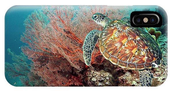 Green Sea Turtle And Gorgonian IPhone Case