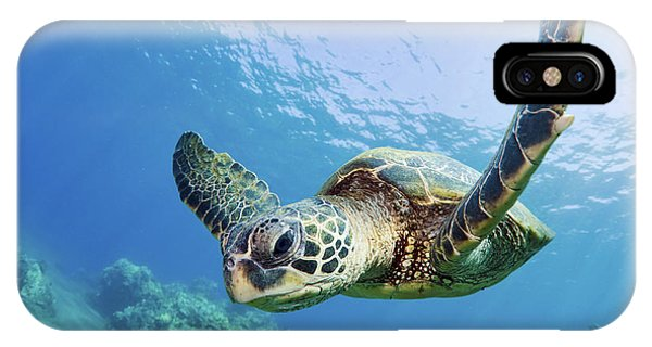 Reptiles iPhone Case - Green Sea Turtle - Maui by M Swiet Productions