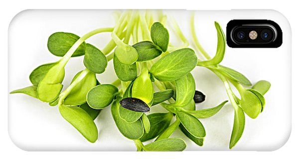 Sunflower Seeds iPhone Case - Green Sunflower Sprouts by Elena Elisseeva