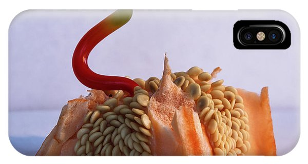 Green Tipped Pepper Snake IPhone Case