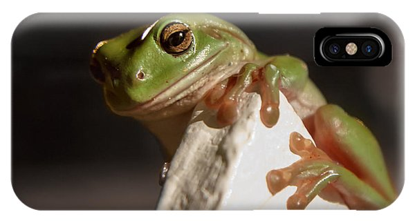 Green Tree Frog Keeping An Eye On You IPhone Case