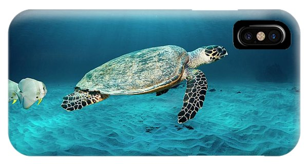 Ichthyology iPhone Case - Green Turtle And Circular Spadefish by Georgette Douwma
