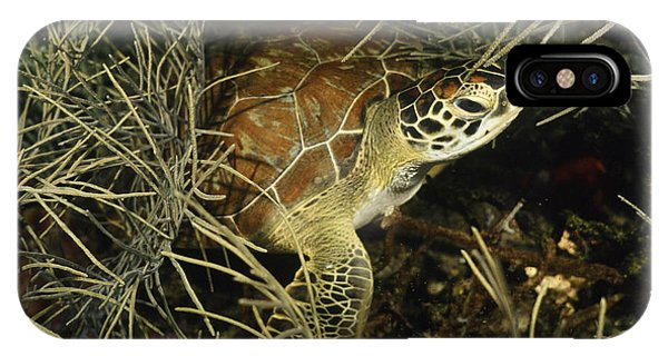Green Turtle In Soft Corals IPhone Case