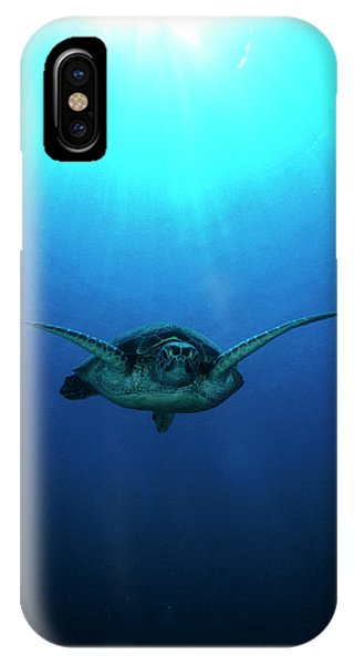 iPhone Case - Green Turtle by Matthew Oldfield/science Photo Library