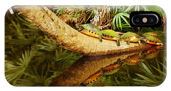 Boynton iPhone Case - Green Turtles Chelonia Mydas On A Tree by Panoramic Images
