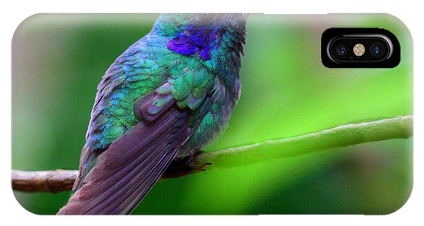 Green Violet Ear Hummingbird IPhone Case