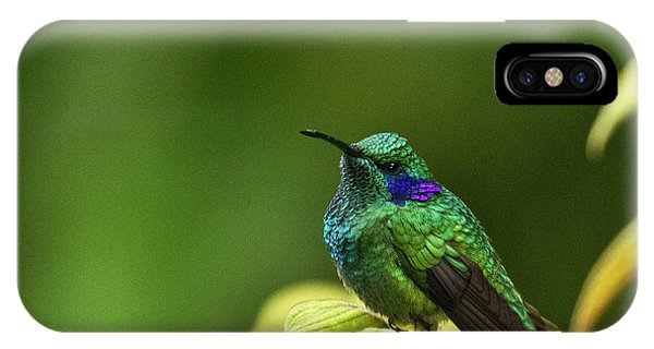 Green Violetear Hummingbird IPhone Case