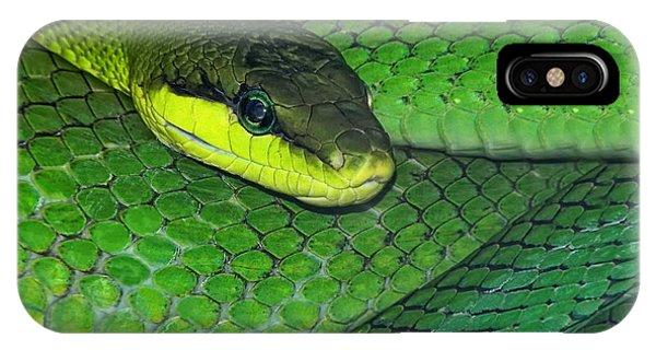 Viper iPhone Case - Green Viper by Joachim G Pinkawa