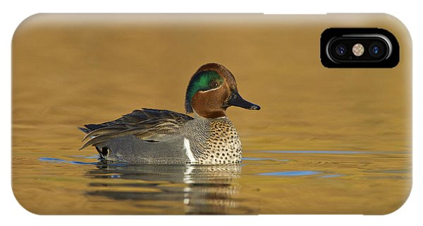 Green Wing Teal IPhone Case