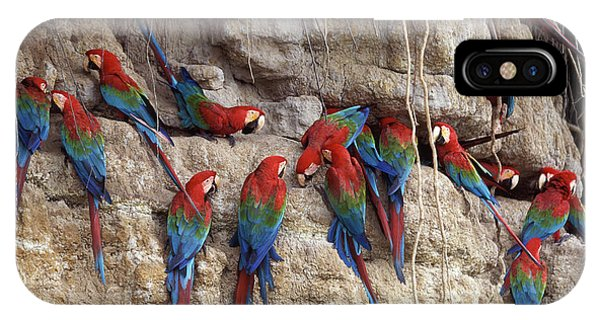 Macaw iPhone Case - Green-winged Macaw by Francois Gohier
