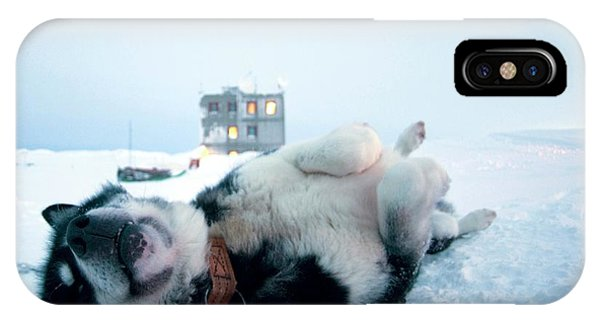 Sled Dog iPhone Case - Greenland Dog by Louise Murray/science Photo Library