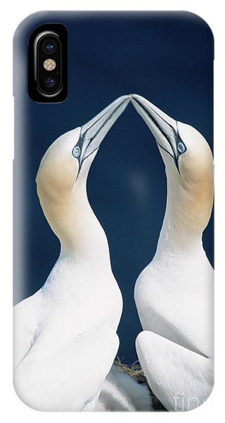 Boobies iPhone Case - Greeting Gannets Canada by Yva Momatiuk John Eastcott