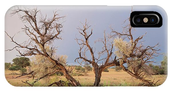 Grey Camelthorn Tree In The Auob Riverbed IPhone Case
