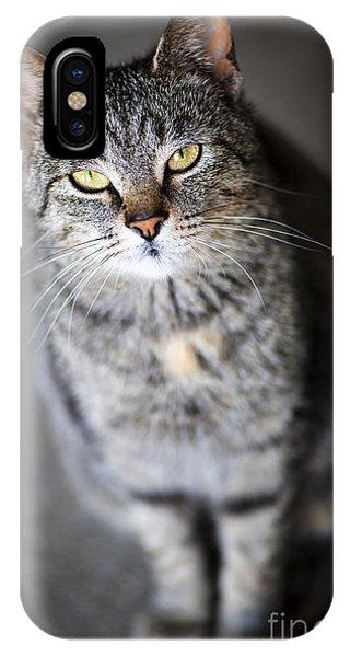 Grey Cat Portrait IPhone Case