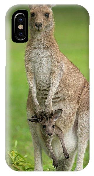 Kangaroo iPhone Case - Grey Kangaroo And Joey  by Yva Momatiuk John Eastcott