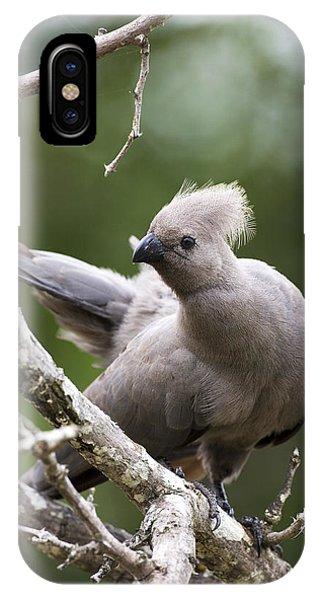 Grey Lourie/goaway Bird Phone Case by Sean McSweeney