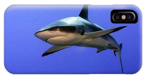Danger iPhone Case - Grey Reef Shark  (carcharhinus Amblyrhynchos) by Ilan Ben Tov