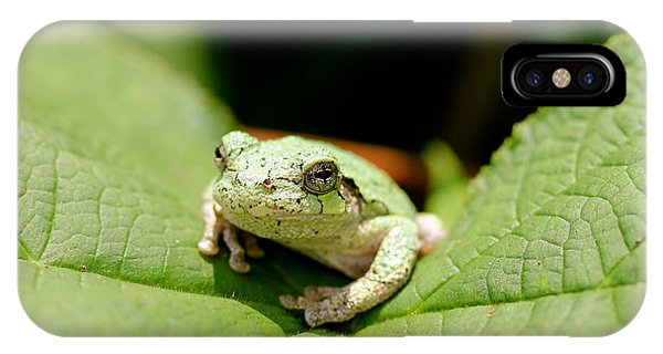 Grey Tree Frog IPhone Case