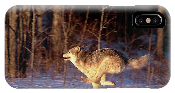 Grey Wolf Running Phone Case by William Ervin/science Photo Library