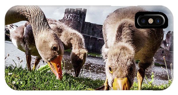Goslings iPhone Case - Greylag Geese Grazing by Paul Williams