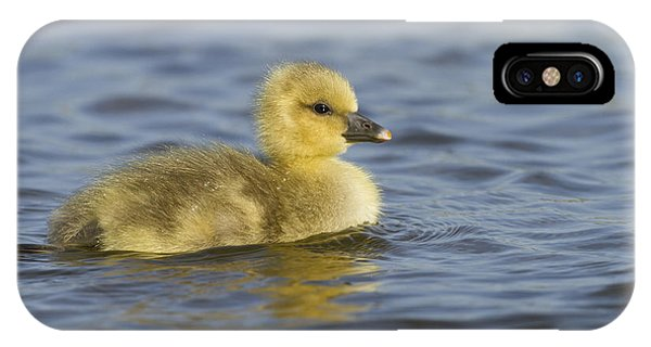 Goslings iPhone Case - Greylag Goose Gosling Zeeland by Sytze Jongma
