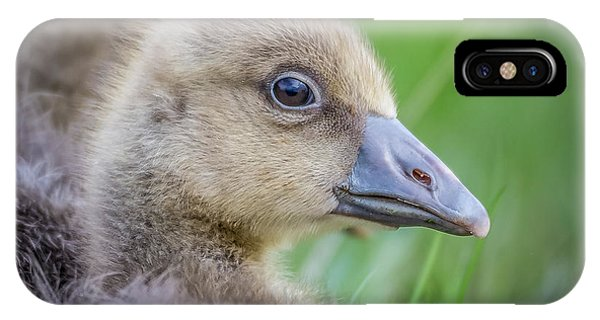 Goslings iPhone Case - Greylag Goslings, Iceland by Panoramic Images