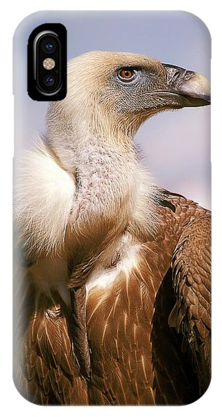 Griffon iPhone Case - Griffon Vulture (gyps Fulvus) by Photostock-israel