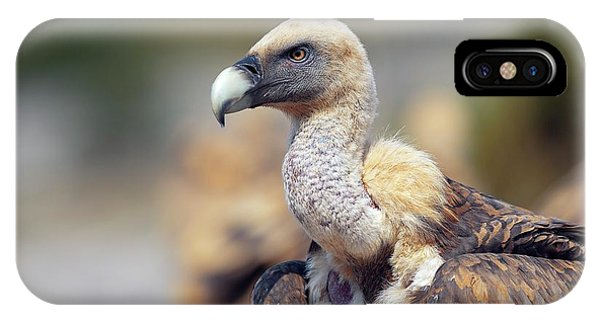 Griffon iPhone Case - Griffon Vulture by Nicolas Reusens