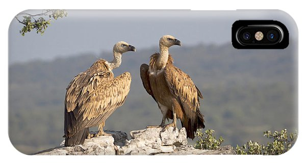 Griffon iPhone Case - Griffon Vulture Pair Extremadura Spain by Gerard de Hoog