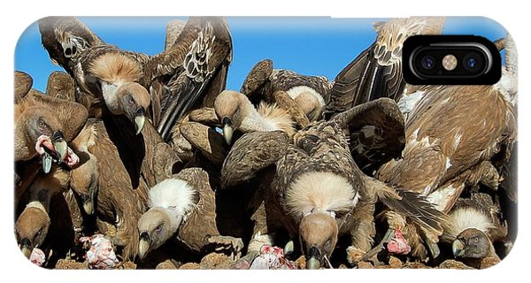 Carcass iPhone Case - Griffon Vultures Feeding by Nicolas Reusens