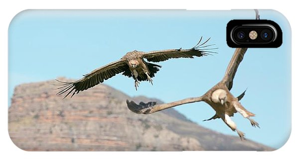 Griffon iPhone Case - Griffon Vultures Flying by Nicolas Reusens