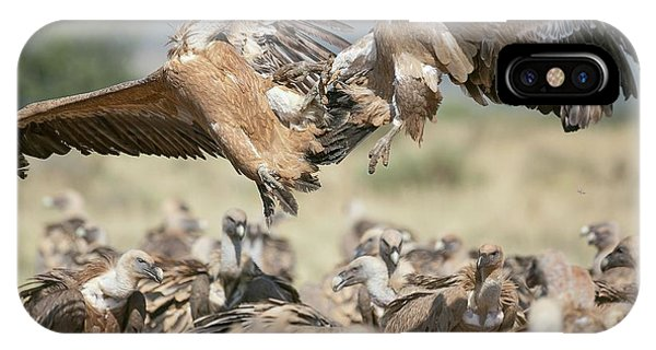 Griffon iPhone Case - Griffon Vultures by Nicolas Reusens