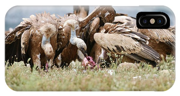 Griffon Vultures Scavenging IPhone Case